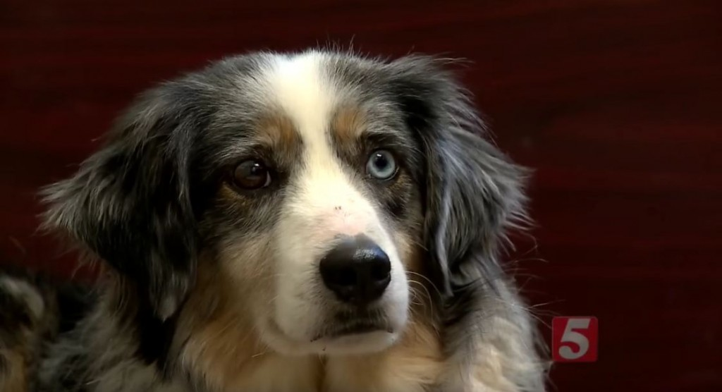 An Injured Dog, On The Run For Four Years, Is Finally Rescued
