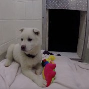 A Puppy Rescued From Dog Meat Trade In South Korea Plays With A Toy For The Very First Time