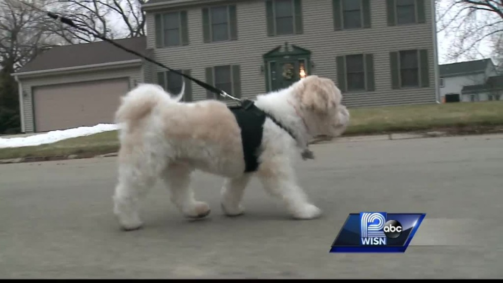 Blind And Deaf Dog Sniffs Out A Gas Leak In His Neighborhood