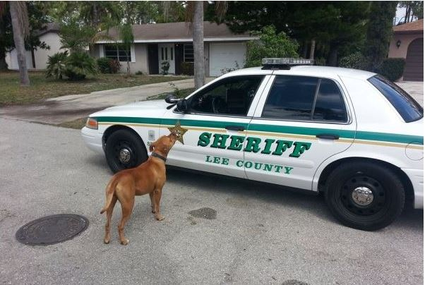 When Police Got Called About A Dangerous Pit Bull, They Never Expected The Dog To Do This…