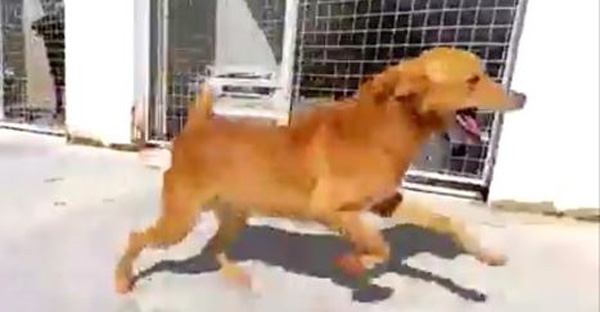 Dog Finds Forever Home After 9 Years Of Living In A Kennel