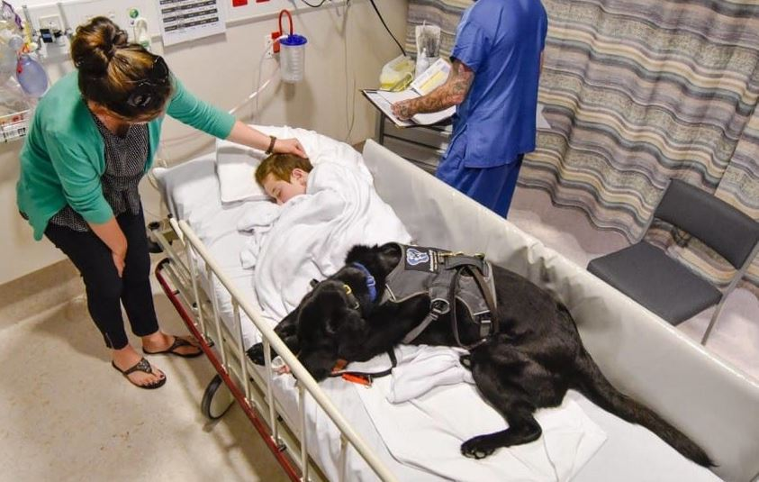This dog refuses to leave his little's boy hospital bed. The reason? This is incredibile!