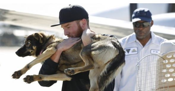 Navy Rescues Dog Lost at Sea Five Weeks Ago
