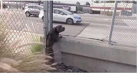 Homeless Pit Bull Rescued Dangerously Close To A Busy Freeway