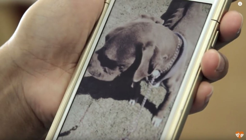 They Got A Dog And Left Him In The Backyard To Die. But Then This Happened…