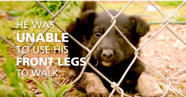A Puppy Mill Rescue Puppy Couldn't Even Walk! Get Ready To See Him Now!