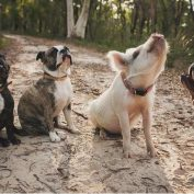 She May Not Look Like Her Siblings, But That Doesn't Bother This Little Pig One Bit