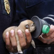 Project Breathe Works To Change Statistics Of Pet Tragedies In House Fires