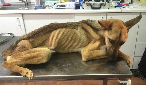 01-rescued_dog