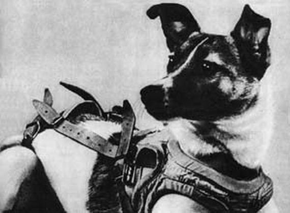 In 1957, This Dog Made History By Being The First Animal To Orbit The Earth