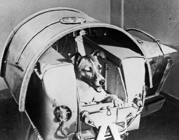 03-Dog-Made-History