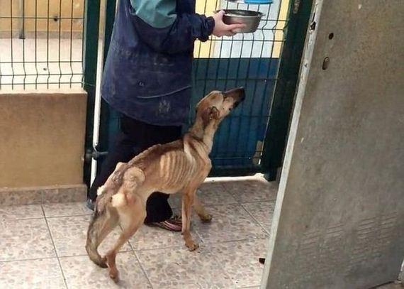 03-rescued_dog