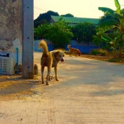 Man Cares For And Feeds 80 Stray Dogs In Thailand