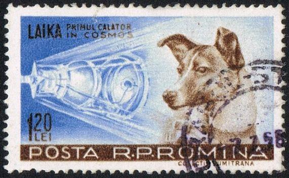 05-Dog-Made-History