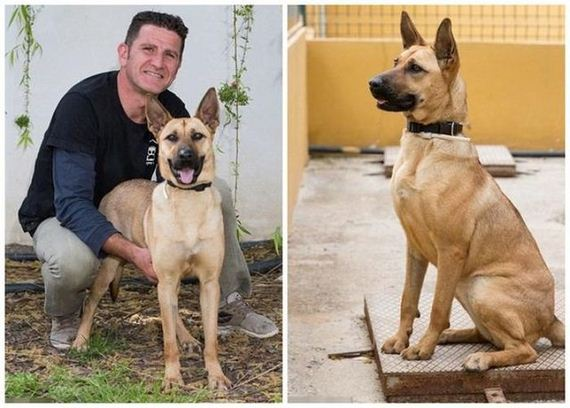 05-rescued_dog