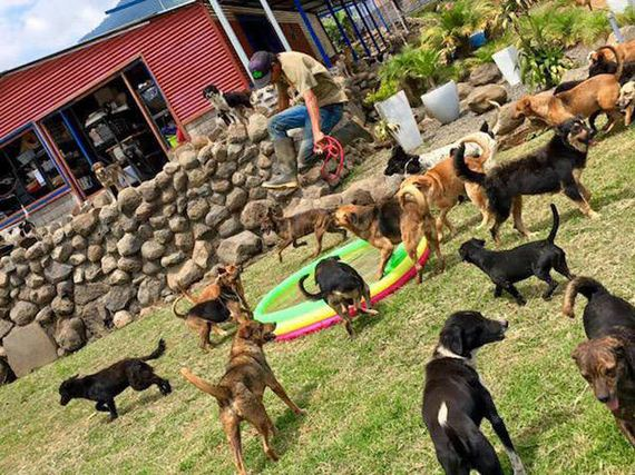 06-there_is_dogs_paradise
