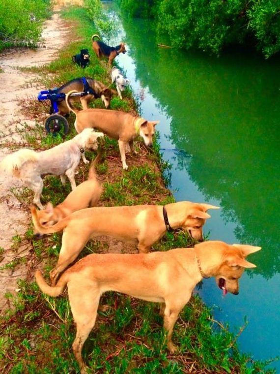 07-Stray-DogsStray-Dogs