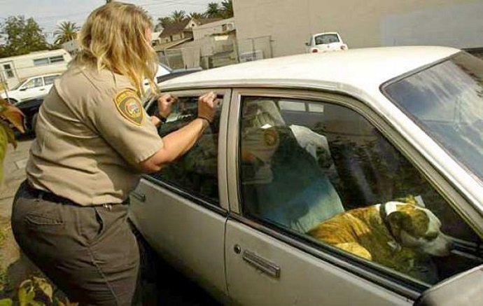 It Is Now Legal To Smash Car Windows To Get A Dog Out Of A Hot Car In Florida!