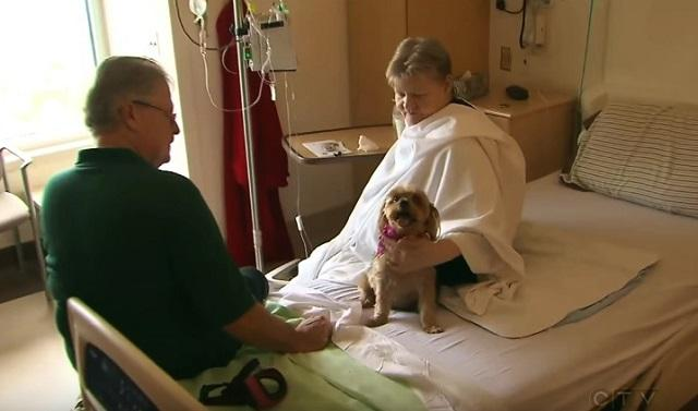 This Amazing Hospital Now Allows Your Pets To Visit You