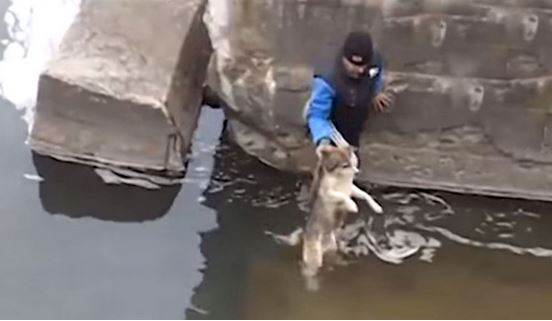 A Man Rescues A Drowning Dog, But It's What The Dog Does Next That Is Melting Hearts!