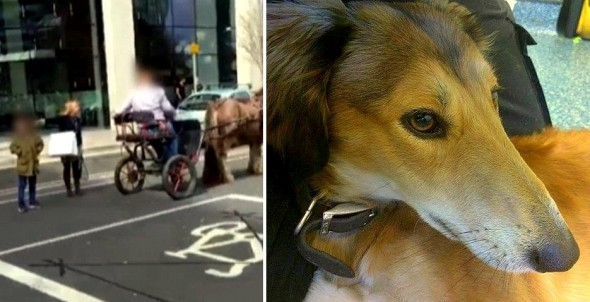 Horrified Onlookers Save Dog Being Dragged Behind Horse & Cart