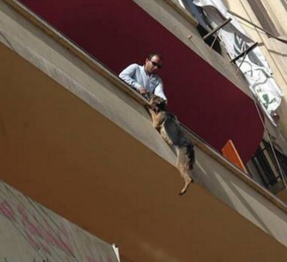 Dog Who Nearly Hangs Self From Balcony Heroically Rescued