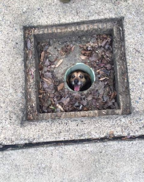 Dog Stuck in a Pipe for Almost a Week Finally Rescued