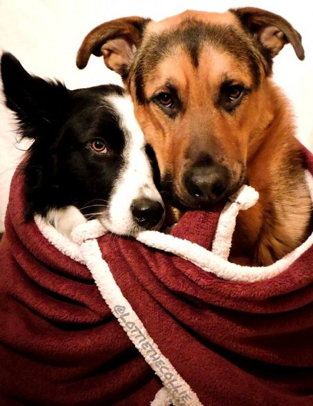 """Rescue Dogs Hug When Asked """"Who's Your Best Friend?"""""""