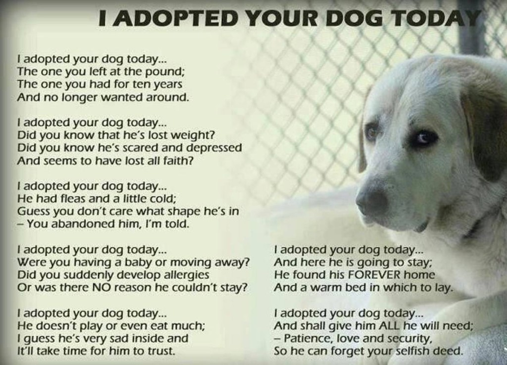 This Letter Is On Behalf Of Any Dog That's Ever Been Dumped