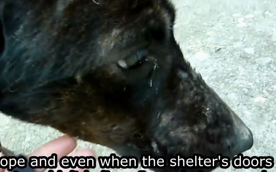 A Little Love Is All This Dog Needed To Make An Amazing Transformation
