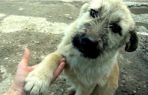 Super Appreciative Puppy Shakes His Rescuer's Hand