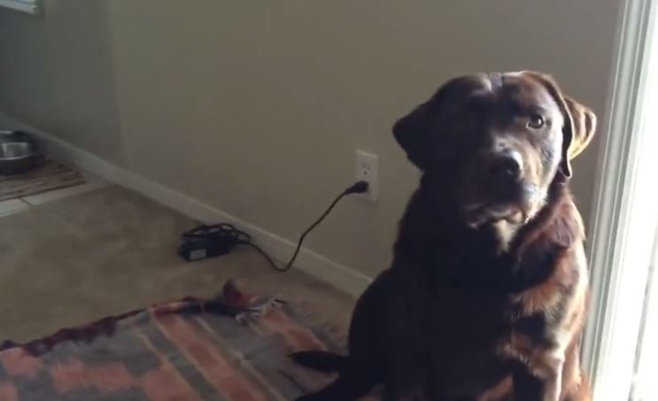 Owner convinces dog he's thirsty – when he's not