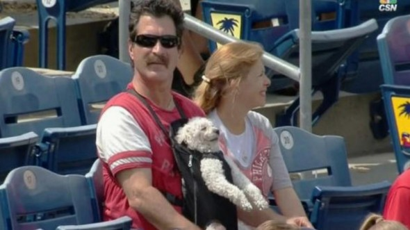 Dog Enjoys Sunny Afternoon at Ballpark in Papoose