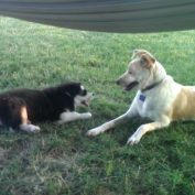 This Dog Has A Funny Way Of Telling The Puppy To Quiet Down