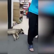 Literally, The World's Laziest Dog