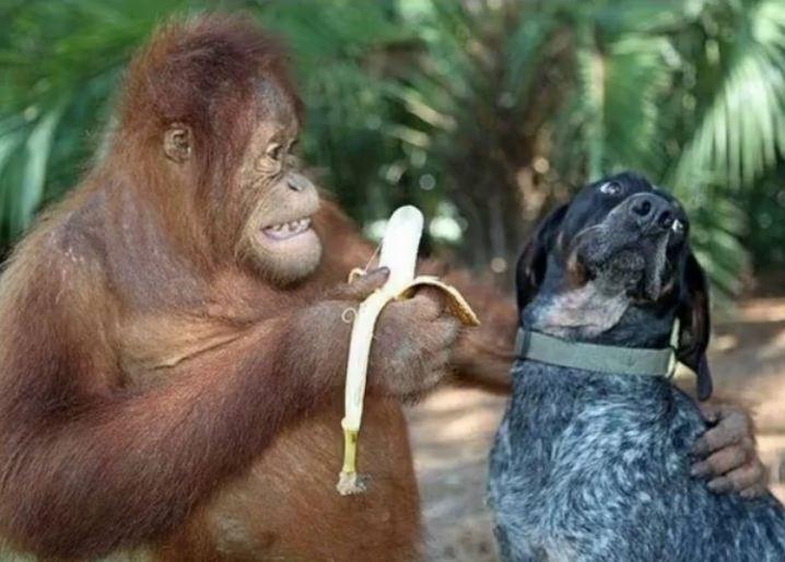 Orangutan and Dog Become Best Friends at a Wildlife Refuge