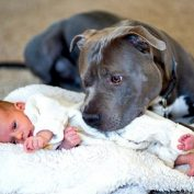 Man Worried About Wife's Pit Bull When Baby Is Born Is Completely Blown Away by What He Does