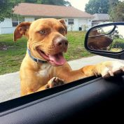 Florida Deputy Befriends Wandering Pit Bull