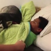 Husky Doesn't Want Human to Wake Up for School