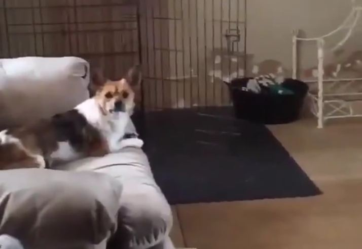Dog's RAMPAGE Through House Has a Surprise Ending!
