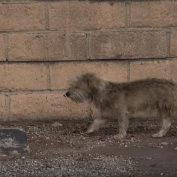 This Homeless Dog Was Terrified Of People — Now Watch His Unbelievable Rescue