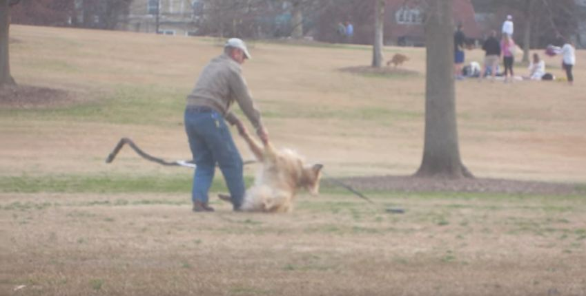 Dog Throws Tantrum When Human Wants to Leave Park
