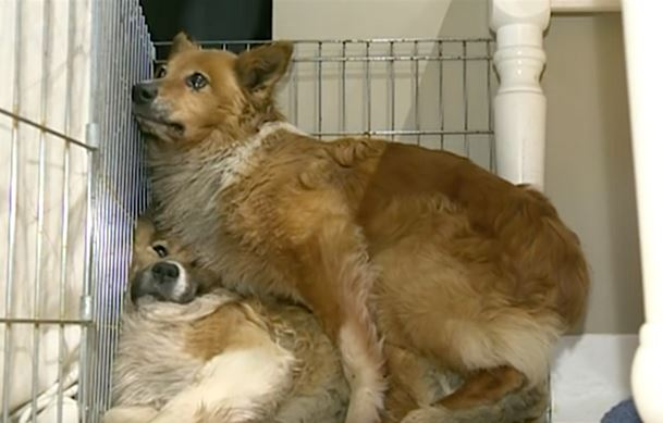 The 2 Rescue Dogs Sat In The Corner Like This. The Reason? Unbelievable.