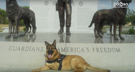 This Dog Was Injured In War, And THIS Just Made Her Retirement Extra Special… OMG