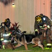 Retired Police Dog Leads Firefighters to Toddlers Trapped in Burning Home