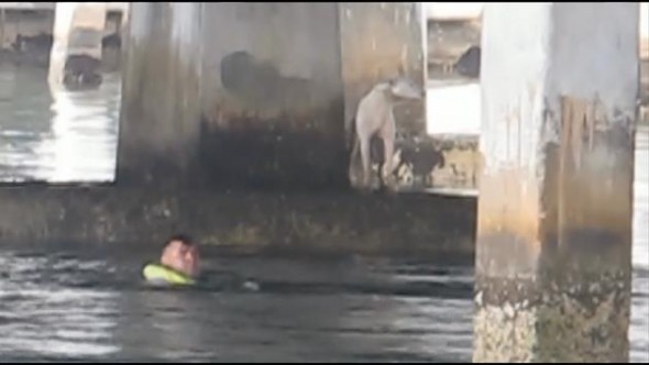 Firefighter Jumps into Florida Bay to Rescue Stranded Dog