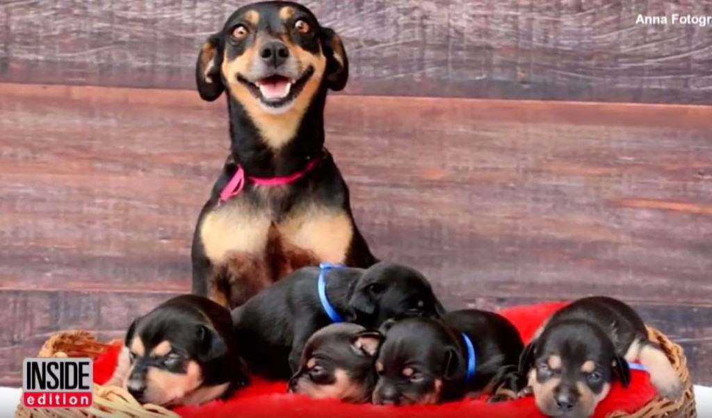 Dog With Beautiful Maternity Photos Now Poses With Her Newborn Puppies!
