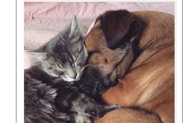 This Kitten Is A Personal Nurse To A Dog Who's Suffering From Epilepsy