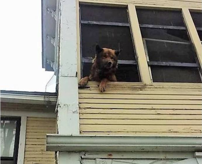 Trapped Dog Rescued After Weeks Of Staring Down From This Porch