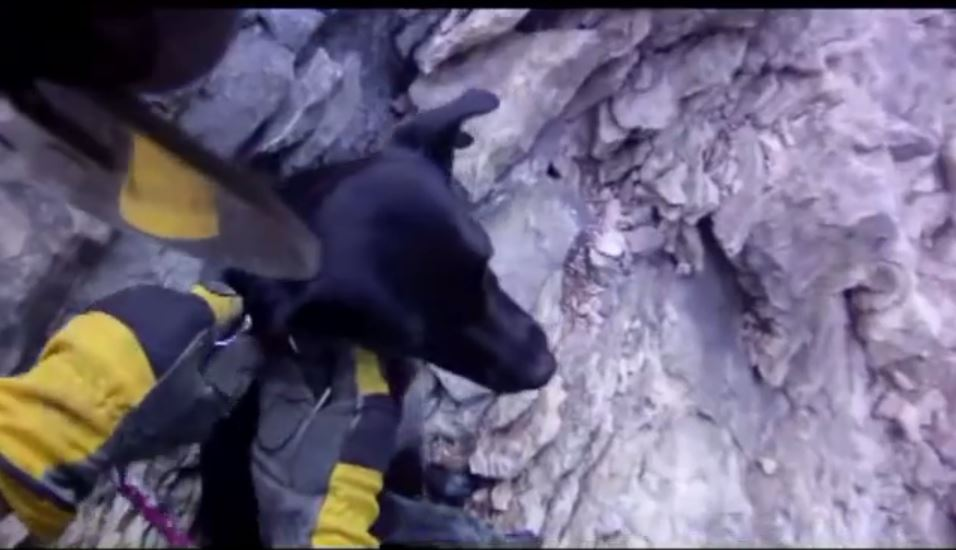 Firefighter Captures Amazing Dog Rescue On Camera
